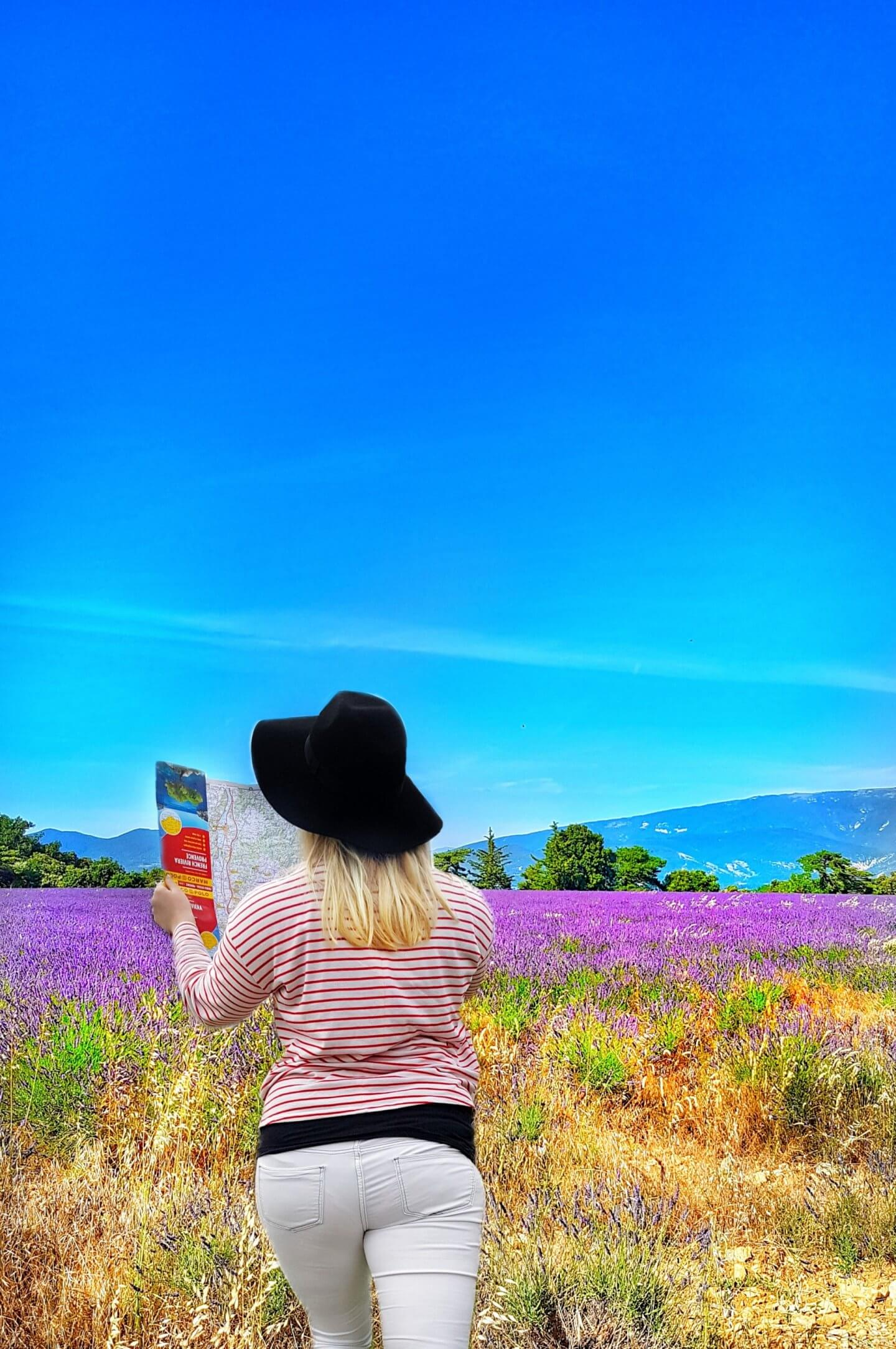 lavender season in provence south of france valreas lavender season provence lavender season
