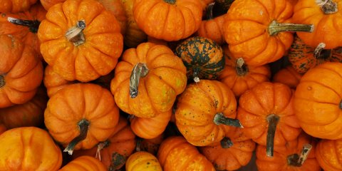 3 days in connecticut 3 day itinerary pumpkins