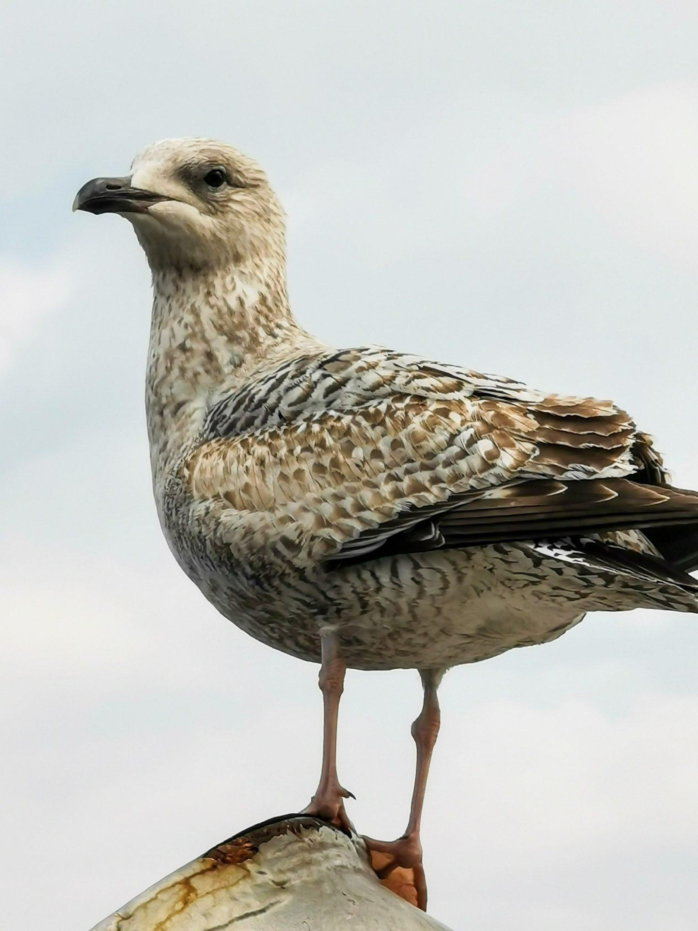 huawei p30 pro review  seagull Dublin x10