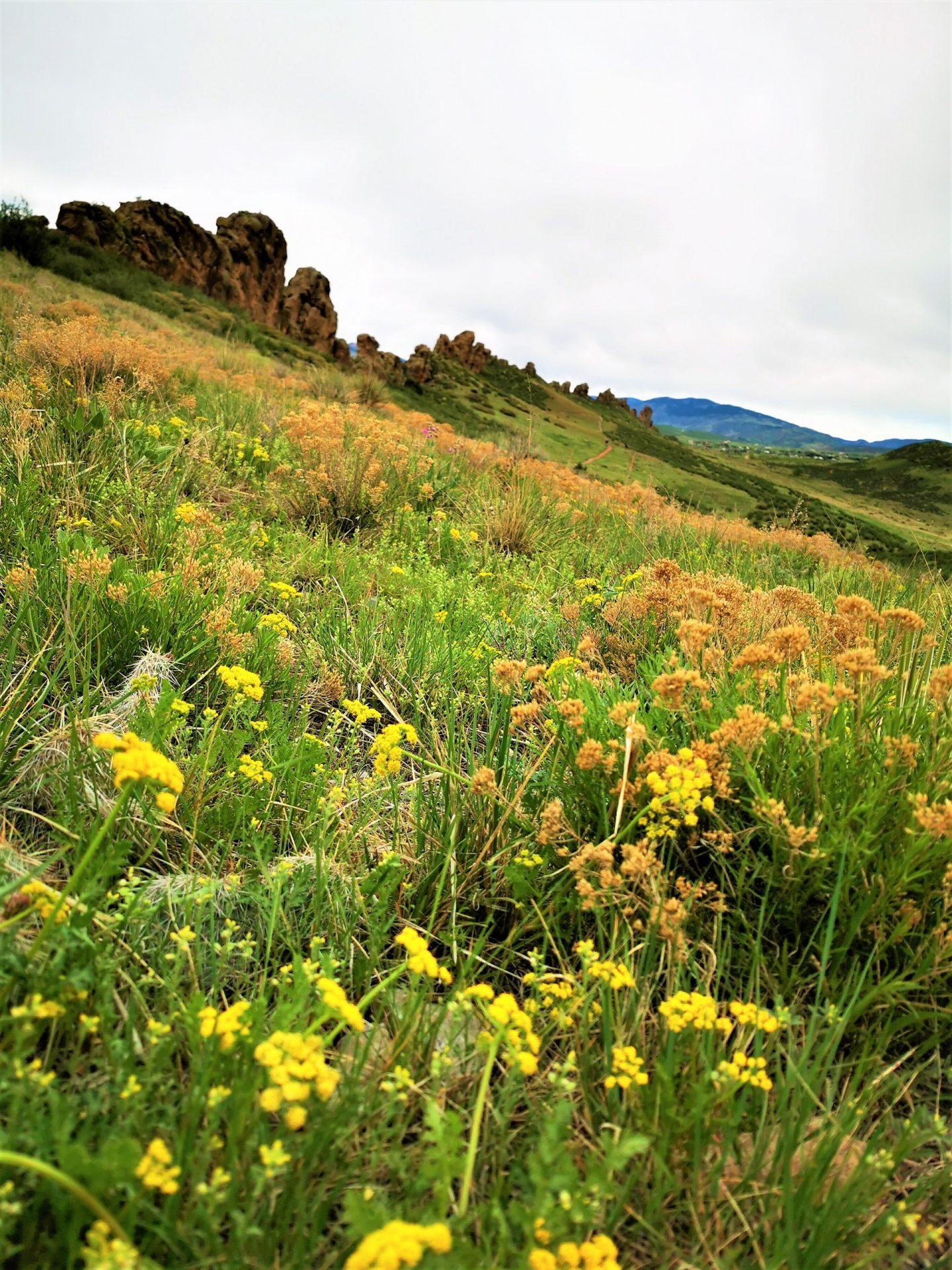 Devil's backbone hike Loveland Colorado wildflowers